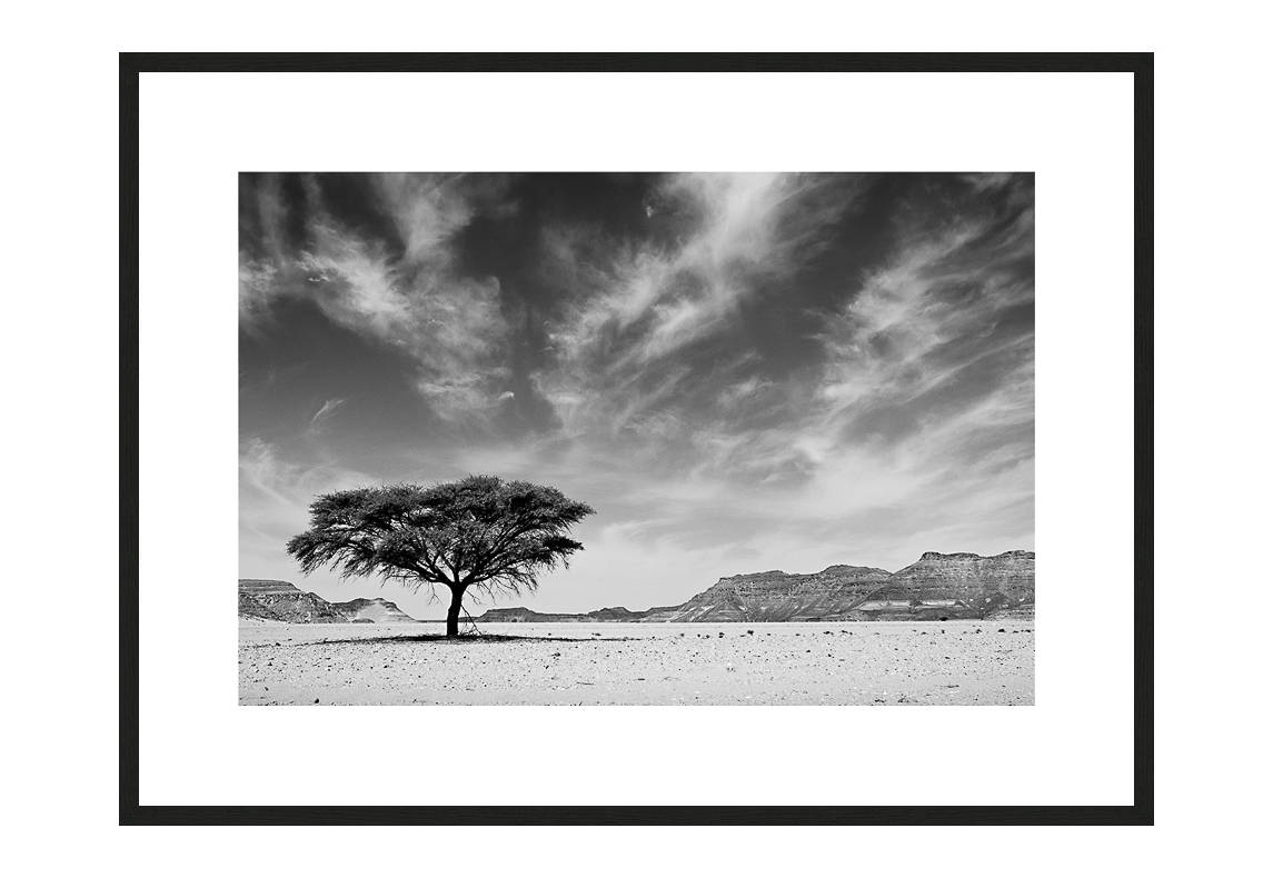 Tree Of Life with frame, Desert Stories Series (Photo Edition), Nik Barte