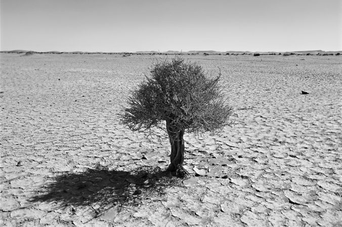 Spirit of Perseverance, Desert Stories Series, Nik Barte