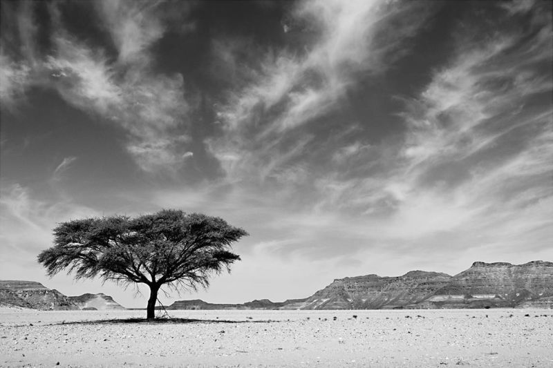 Tree Of Life, Desert Stories Series (Photo Edition), Nik Barte